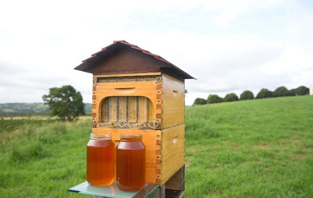 Honey-on-Tap-Directly-From-Your-Beehive-1