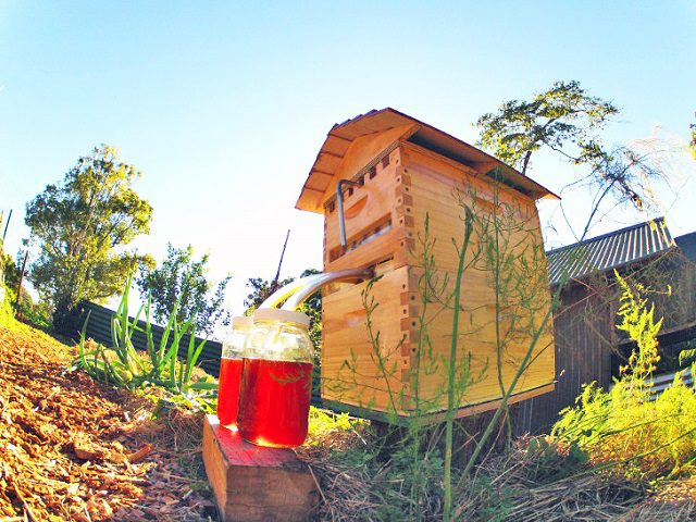 Honey-on-Tap-Directly-From-Your-Beehive-7