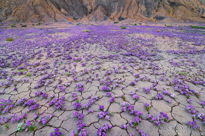 Colourful Flowers in Utah Deserts Captured by Guy Tal 1