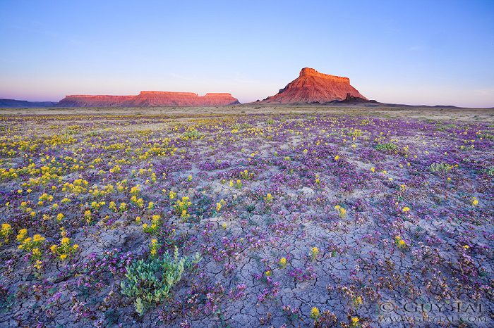 Colourful Flowers in Utah Deserts Captured by Guy Tal 10