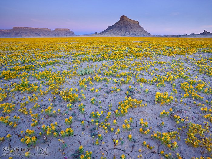 Colourful Flowers in Utah Deserts Captured by Guy Tal 9