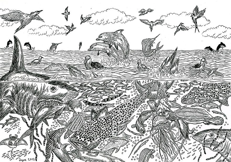 11-Year-Old Artist Creates Amazingly Detailed Drawings of Wildlife 12