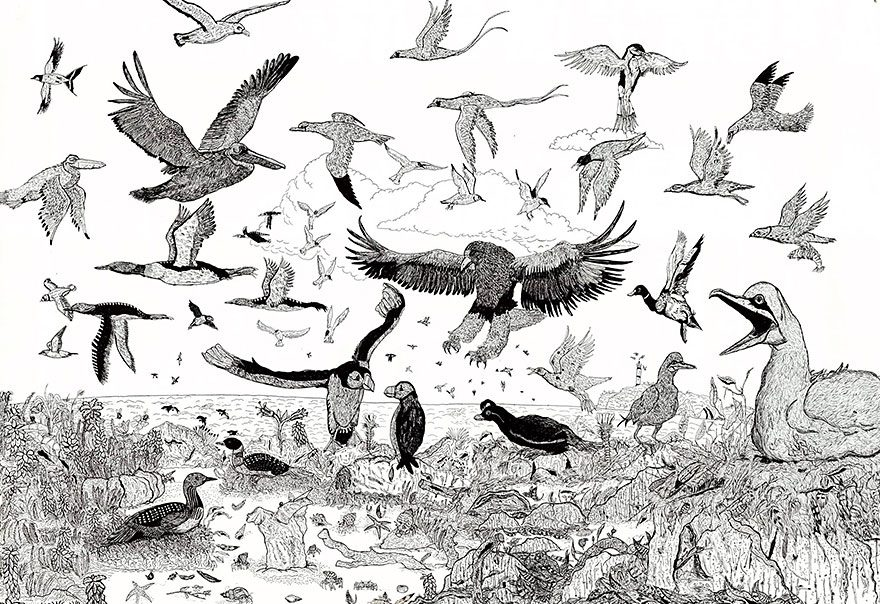 11-Year-Old Artist Creates Amazingly Detailed Drawings of Wildlife 6