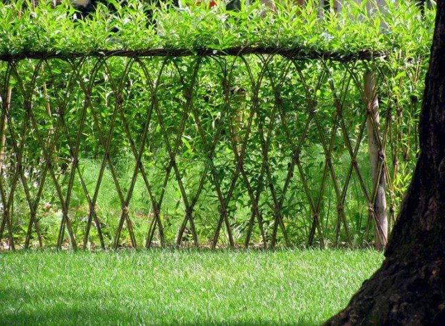 20 Beautiful Examples Of Living Willow Fences 1