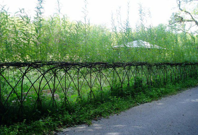 20 Beautiful Examples Of Living Willow Fences 2