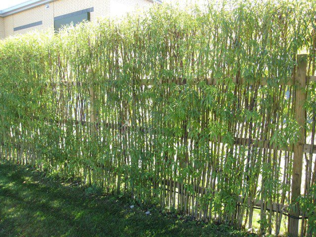 20 Beautiful Examples Of Living Willow Fences 20