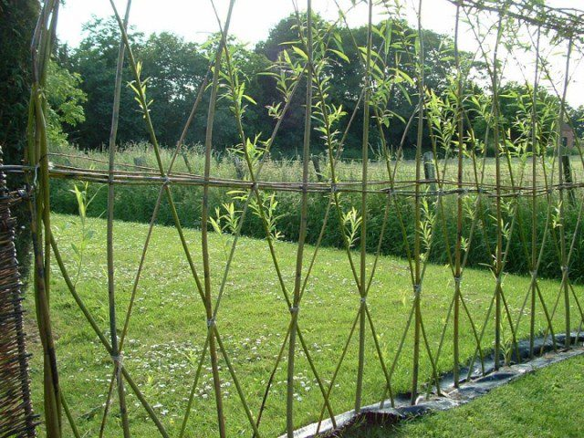 20 Beautiful Examples Of Living Willow Fences 3