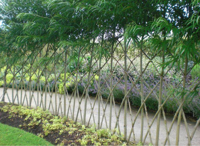 20 Beautiful Examples Of Living Willow Fences 5