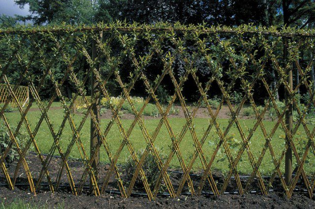 20 Beautiful Examples Of Living Willow Fences 6