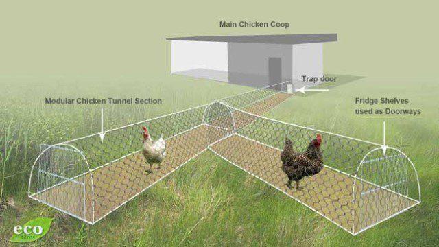 Diy chicken tunnel icreatived for Diy chicken run