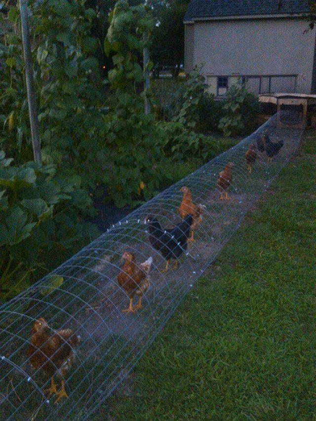 Farm Fence Around House