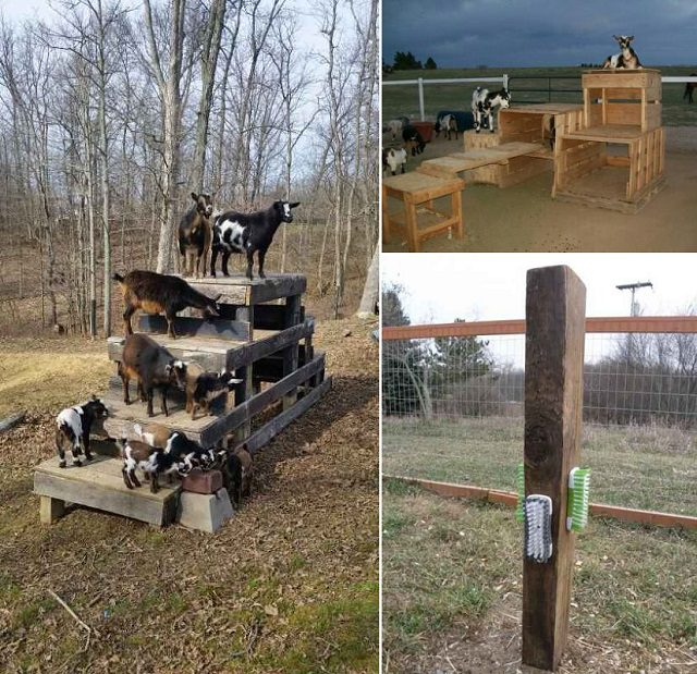 DIY Toys For Goats To Keep Them Busy 1