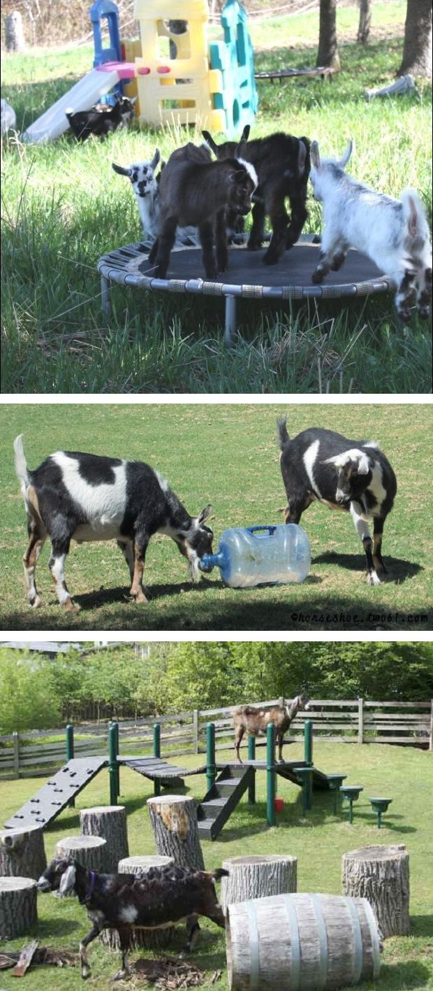 diy toys for goats to keep them busy