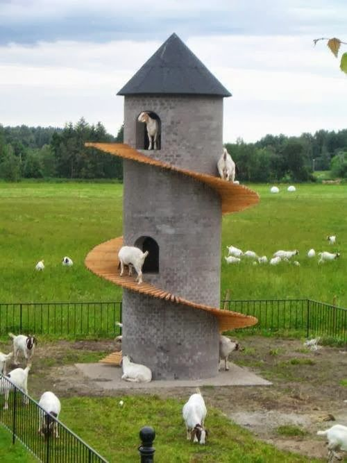 DIY Toys For Goats To Keep Them Busy 7