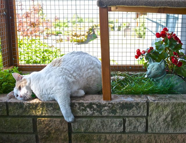 """Catio Spaces"" Keep Your Cat Safe and Happy 10"