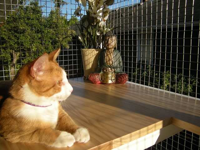 Outdoor Cat Enclosure Apartment