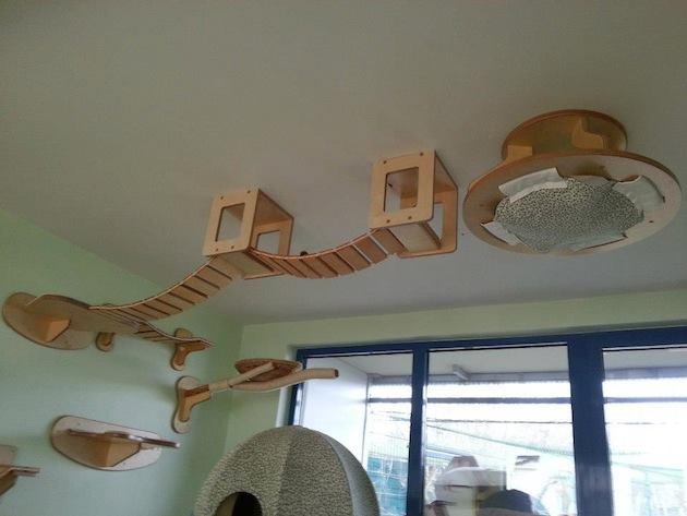 attic ladder ideas - Cozy Cat Room Design iCreatived
