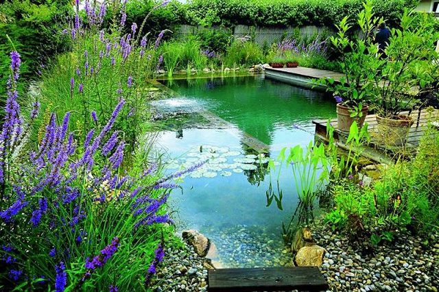 Natural-Swimming-Pond-1