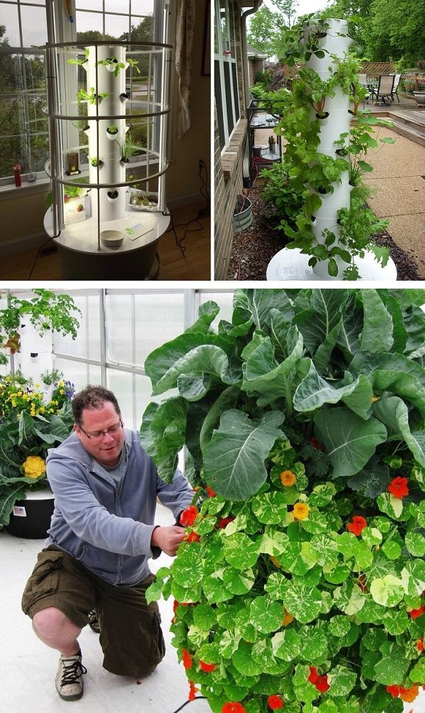 Tower Garden with a unique vertical garty system, which has only fresh fruit and vegetables at home