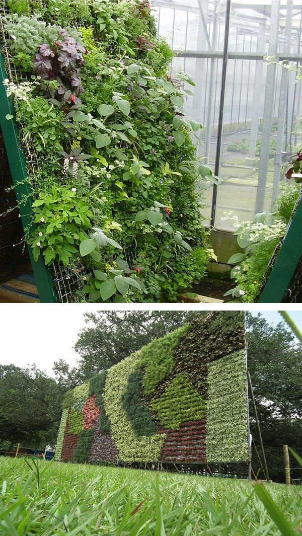 Vegetables that can be grown