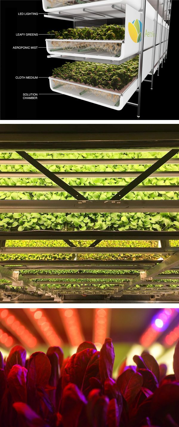 Vertical Aeropion Agriculture Healthy food about you.