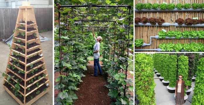 Vertical Garden Ideas For Converting Small Spaces Into A Large Crop