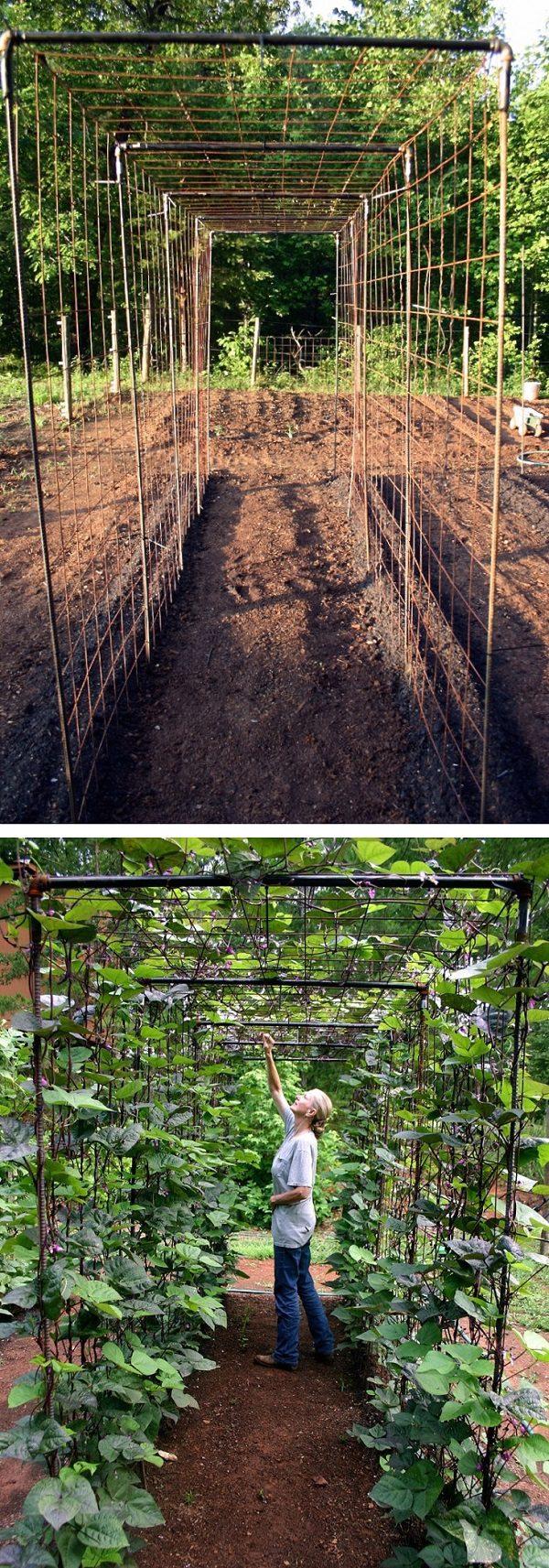 Vegetable Garden Test DIY Bean Trellis